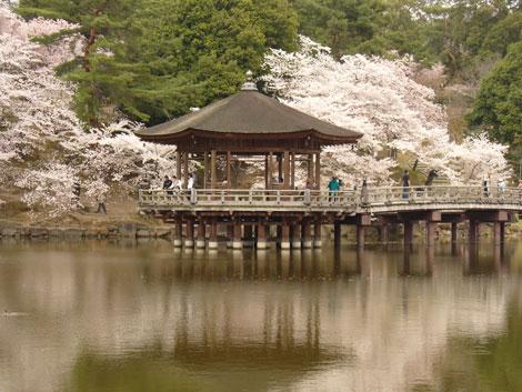 Nara park UKIMIDO